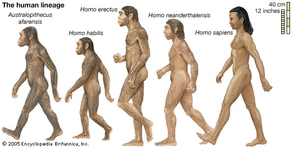 an argument in favor of evolution as the explanation of the origins of human life on earth As many readers may know, one of my frequent themes, in evolution news posts as well as in four peer-reviewed and two editor-reviewed publications i have written over the last 17 years, has been the second law argument against unguided evolution here is a little timeline outlining the history of.