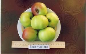 яблоня брат чудного фото